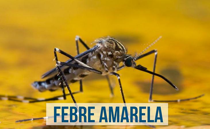 Febre amarela – Ministério da Saúde atualiza casos no país