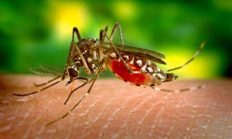 Minas é o 5º estado em aumento do número de casos prováveis de dengue em 2019