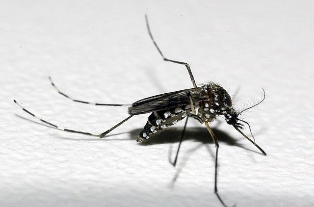 Boletim Epidemiológico de Minas Gerais – Monitoramento dos casos de Dengue, Chikungunya e Zika